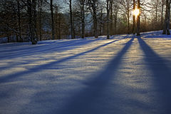 l'hiver de conte de forêt images stock