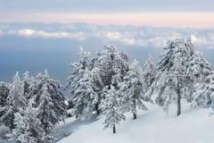 l'hiver de forêt photo libre de droits