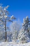 l'hiver de forêt Photographie stock