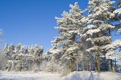 l'hiver de forêt Photos stock