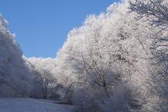 l'hiver de forêt images stock