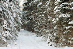 l'hiver de forêt Image stock