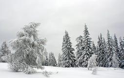 l'hiver de forêt Photos libres de droits