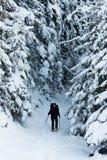 l'hiver de hausse Image libre de droits