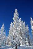 L'hiver de la Laponie   Photo libre de droits