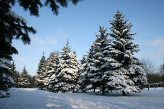 l'hiver de landskape images stock
