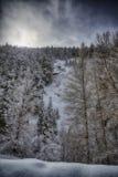 L'hiver de levage Sun photographie stock libre de droits