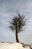 L'hiver de Milou Photos libres de droits