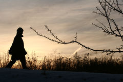 L'hiver de Milou Photo stock