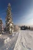 l'hiver de montagnes images libres de droits