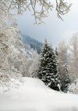 l'hiver de neige de scène Photo stock