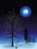 l'hiver de nuit Images libres de droits