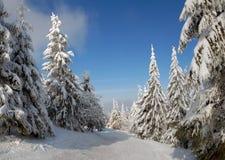l'hiver de panorama de forêt images libres de droits