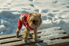 l'hiver de promenade photographie stock