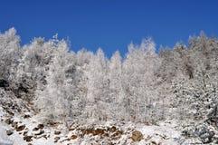 l'hiver de République Tchèque Photographie stock libre de droits