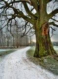 l'hiver de route Images stock
