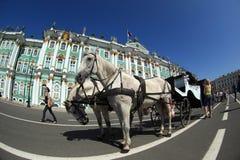 l'hiver de rue de Pétersbourg Russie de palais d'ermitage Photos libres de droits