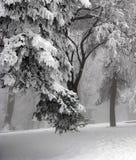 l'hiver de scène Image libre de droits