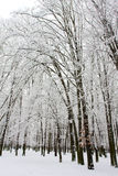 l'hiver de stationnement Photographie stock
