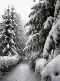 l'hiver de stationnement Images libres de droits