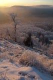 l'hiver de surveillance Photographie stock