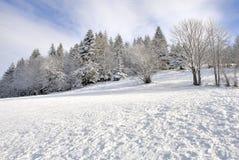 l'hiver de temps photos libres de droits