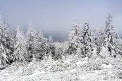 l'hiver de temps photographie stock
