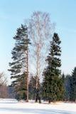 l'hiver de trois arbres Photographie stock