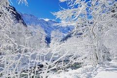 l'hiver de vallée Images libres de droits