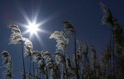 l'hiver de vue de l'Ukraine du soleil de montagne de moloda Image libre de droits