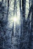 l'hiver de vue de l'Ukraine du soleil de montagne de moloda Images libres de droits