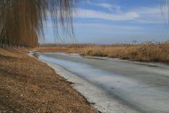 L'hiver de zone humide Image libre de droits