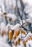 L'hiver doux Image libre de droits