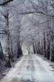 L'hiver en bois de route Image stock