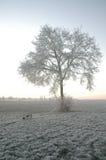 L'hiver en Hollande Image libre de droits
