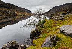 L'hiver en Irlande images libres de droits