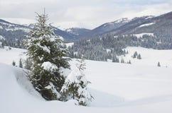 L'hiver en montagnes carpathiennes Images libres de droits