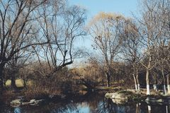 L'hiver en parc Photographie stock