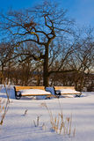 L'hiver en stationnement Images stock