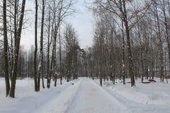 L'hiver en stationnement de ville Arbres sans feuilles, beaucoup de neige froidement Les animaux veulent manger photo stock