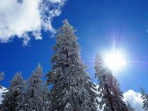 L'hiver ensoleillé photos stock