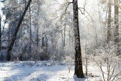 l'hiver ensoleillé de forêt photographie stock libre de droits