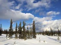 L'hiver errent Images libres de droits