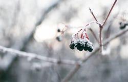 L'hiver est temps Photographie stock