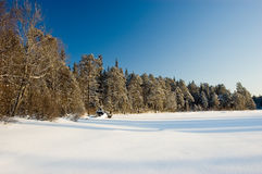 L'hiver Forest Russia La Carélie Photos libres de droits