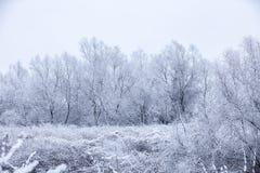 l'hiver givré d'arbres Photo libre de droits