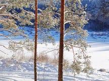 l'hiver givré de jour Images libres de droits
