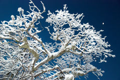 l'hiver glacial de forêt Photo stock