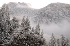 L'hiver grave Photos libres de droits