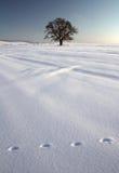 L'hiver I Images libres de droits